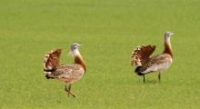 Turismo ornitológico